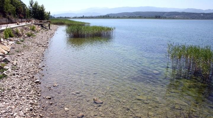 Sapanca Gölü'nü yosun kapladı