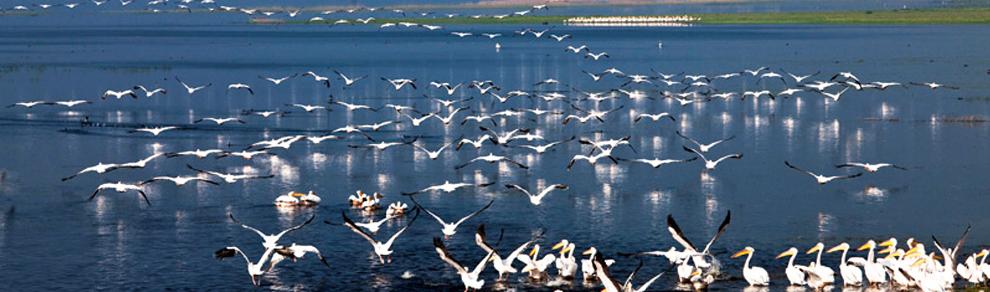 Manyas Kuş Cenneti 'Sanayi Cehennemi' Olacak